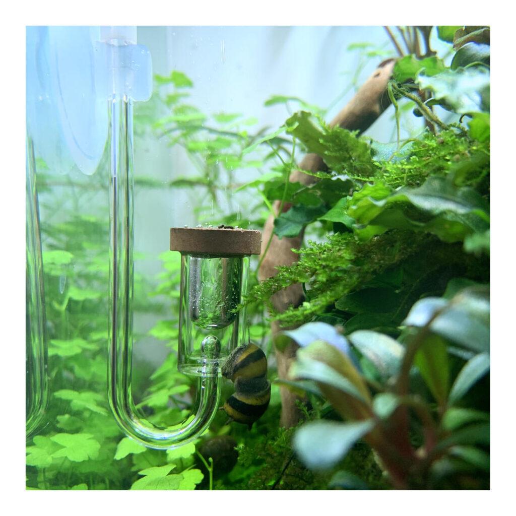 Aquario Neo Diffusor aus Acryl