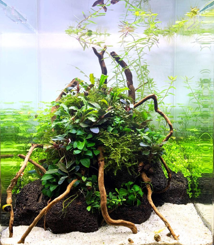 Ein Aquascape mit verschiedenen Aufsitzerpflanzen und einem Aufbau aus Lavagestein und Wurzeln
