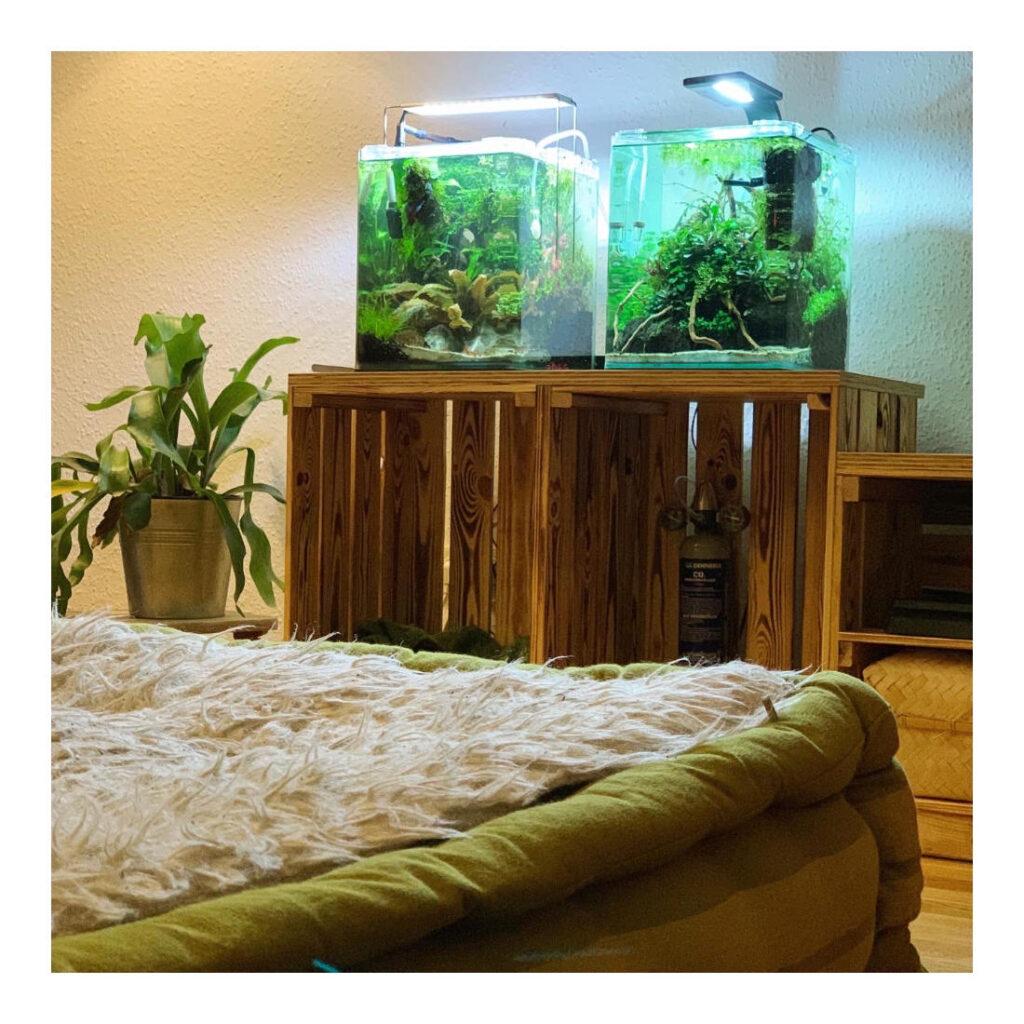 Zwei Nano Aquarien Becken auf einem Holzunterschrank.