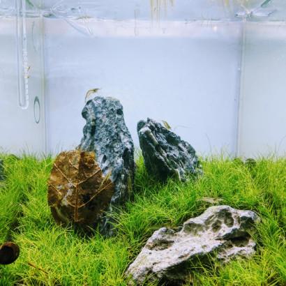 Iwagumi Aquascape