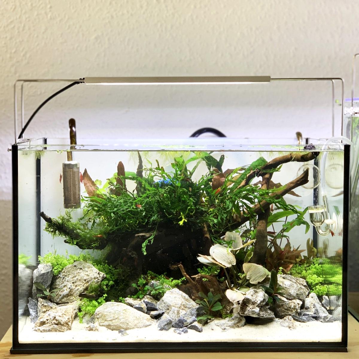 fertig eingerichtetes Nano Aquarium