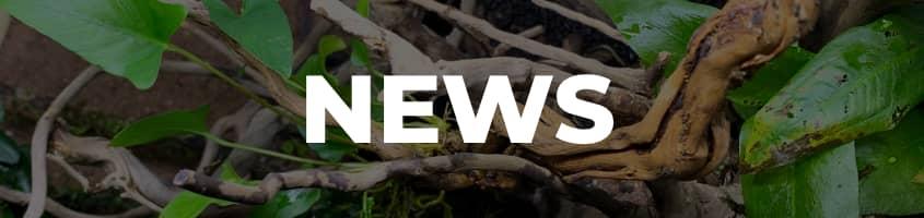Menü News Header
